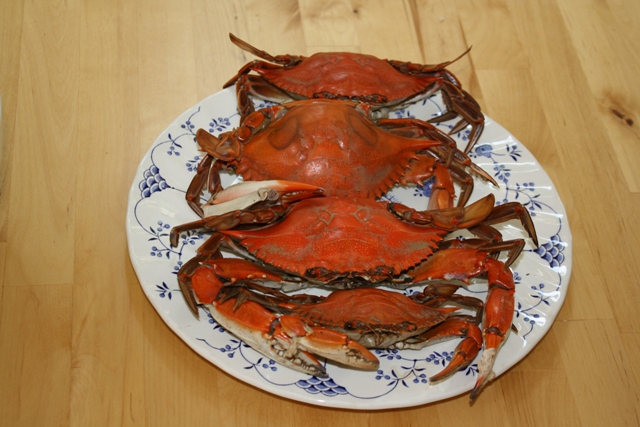 blue crab new jersey
